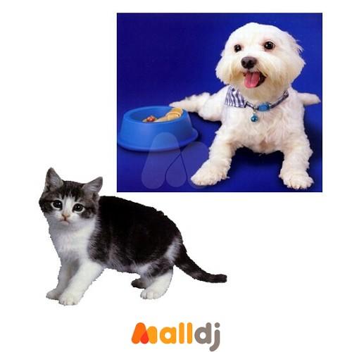 ˙动物:从可爱的动物学习起,培养认知兴趣.